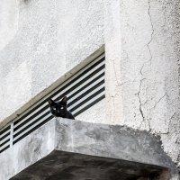 №5- из серии Кошки очарование мое! :: Shmual Hava Retro