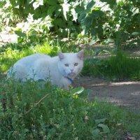 Красивая кошка в нашем дворе :: Фотогруппа Весна.