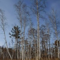 Зимний пейзаж :: Николай