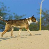animals :: Юрий Удвуд