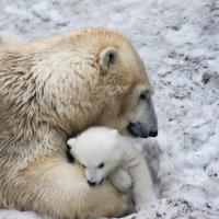 Из жизни животных :: Яна Михалёва