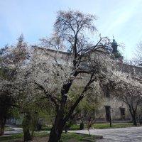 Львов весной :: Руслан Грицунь