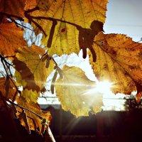 Весенние лучи :: Виолетта Ляшенко