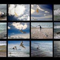 Море и чайки круглый год :: Сергей Рубан