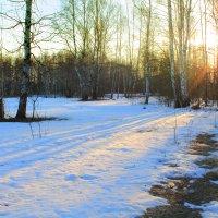 Восход на опушке леса :: Эркин Ташматов