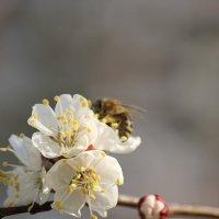 Весенний нектар :: Руслан Грицунь
