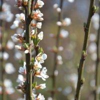 Весна :: Julia Sh