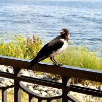 Птичка :: Анна Медведева
