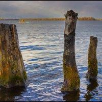 То, что раньше было деревьями :: Denis Aksenov