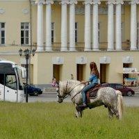 В высоких травах у собора! :: Владимир Шошин