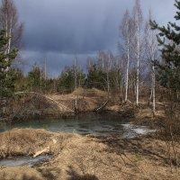 Прогулка по лесу :: Олег Кашаев