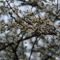 Весна пришла :: Владимир Боровков