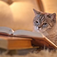 читающий котэ :: Римма Покачалова
