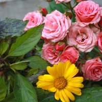 Осенняя ностальгия :: Юлия Талалай