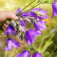 Когда чудесное соприкасается с прекрасным... И наоборот :) :: Anna Lipatova