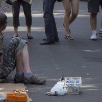 Профессия - нищий с кроликом :: Александр фотостраничка