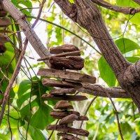 В оранжерее Новосибирского Ботанического сада :: Елена Черненко