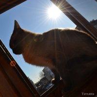 Делает вид,что он египетский кот:) :: Татьяна Майнская