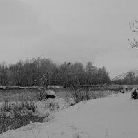 Утки прилетели, а у нас зима... :: Кристина Воробьева