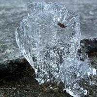 Ледяной куст :: Дмитрий Ерохин