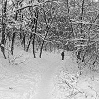 Зимняя картинка :: Сергей Тарабара