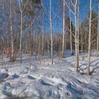 Зима не сдается :: Валерий Струк