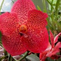 Орхидея 5 :: Елена Байдакова