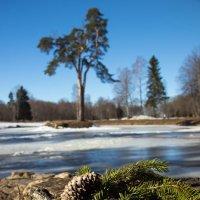 Лесной натюрморт :: Светлана Шмелева