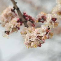 Весна пришла :: fotomaf photorpher