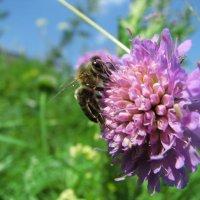 пчелка пашет :: Александр Е