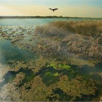 Весна на болоте :: Nikita Volkov