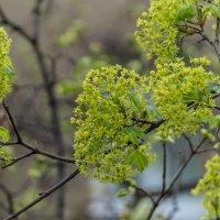 Весна 2 :: Сергей Волков