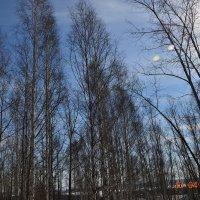 Весна в лесу :: Алексей Корзников