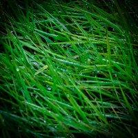 Роса на траве. :: Анатолий Бахтин
