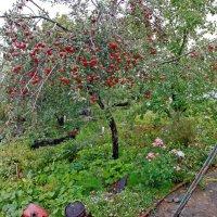 Урожай 2013 :: Юлия Талалай