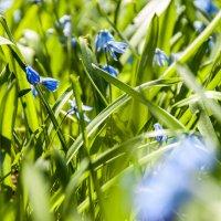 травка и цветочки :: Dmirty Ts