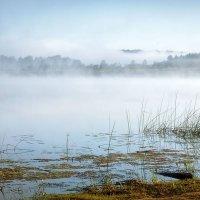 Утро на Кубене реке... :: Александр Никитинский