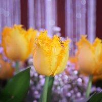 Цветы весны :: Юлия Клименко