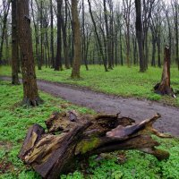 в весеннем лесу :: юрий иванов