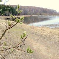 Весна. :: Игорь