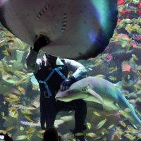 Со скатом и акулой :: Aнна Зарубина