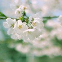 Цветочек :: Анастасия Решетова