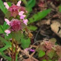 Пчёлка :: Яна Харченко