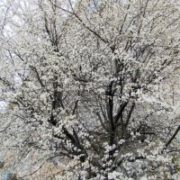 Весна завьюжила-заснежила... :: Людмила Жданова
