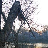 Старое дерево :: Тарас Золотько
