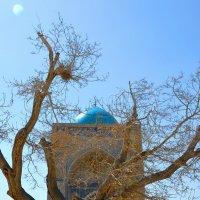 Бухара апрель 2014 :: Михаил Столяров