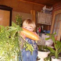 вовка с морковкой :: Аля Бирюза