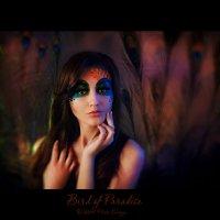 Bird of Paradise 5 :: Александр Матвеев