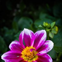 Цветок :: Леонид Туваев