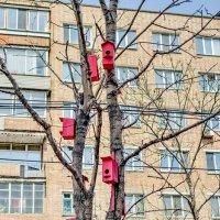 Весна... :: Александр Морозов
